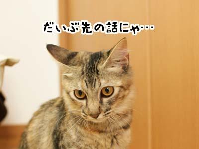 cat1346