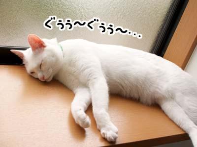 cat1347