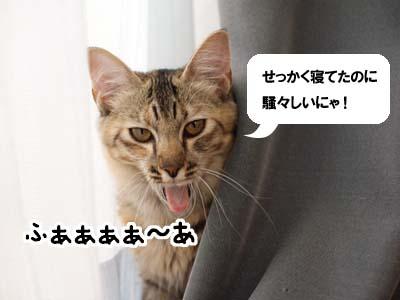 cat1350
