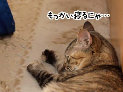 cat1351