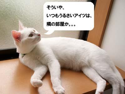 cat1352