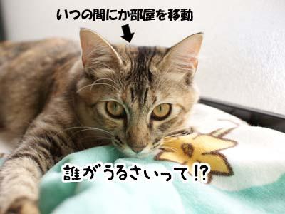 cat1353