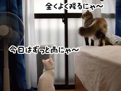 cat1354