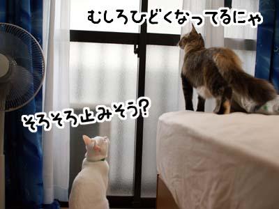 cat1355