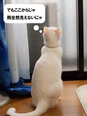 cat1356