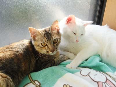 cat1358