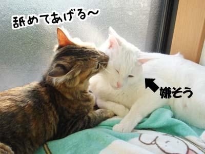 cat1359