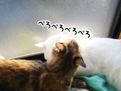 cat1360