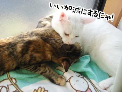 cat1361