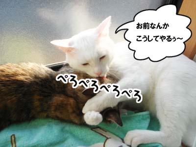 cat1362