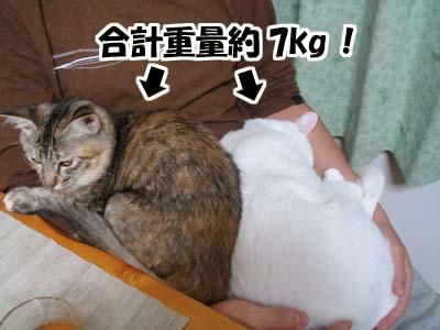 cat1363