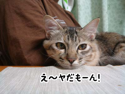 cat1364