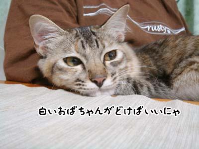 cat1365
