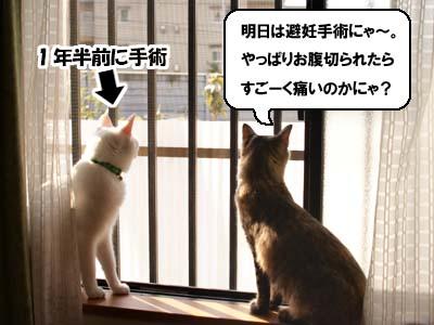 cat1367