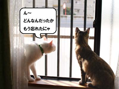 cat1368