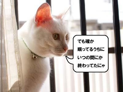 cat1369