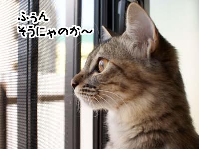 cat1370