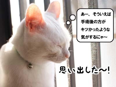 cat1371
