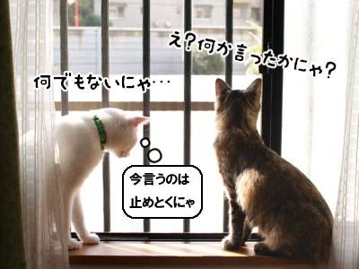 cat1372