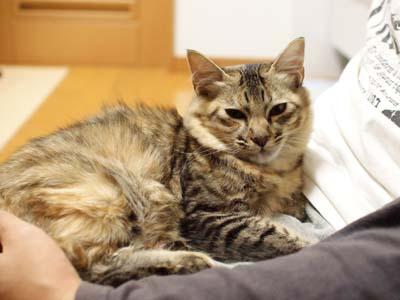cat1373