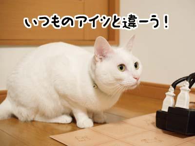 cat1375