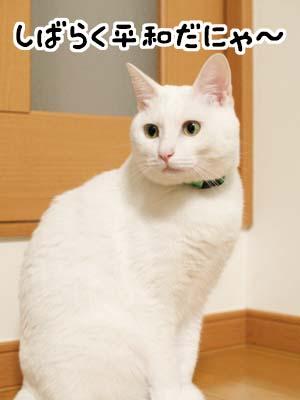 cat1376