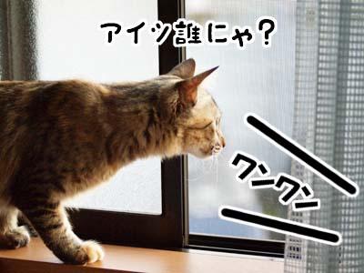 cat1379