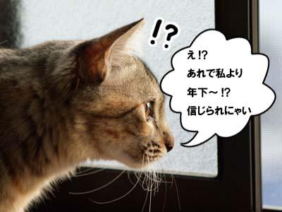 cat1380
