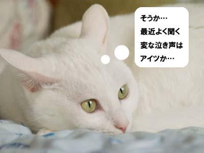 cat1381
