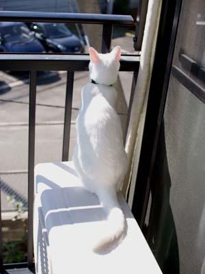 cat1382