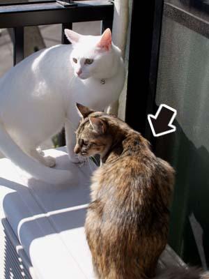 cat1383