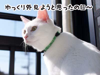 cat1384