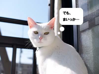 cat1385