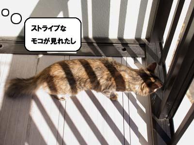 cat1386