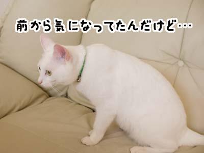 cat1387