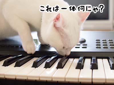 cat1388