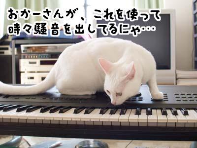 cat1389