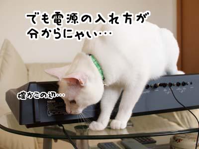 cat1391