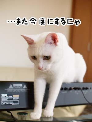 cat1392