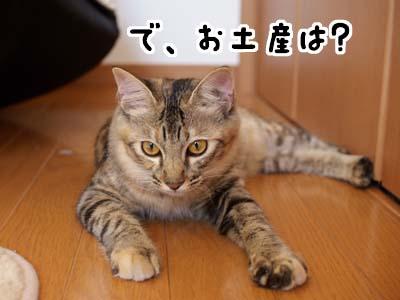 cat1396
