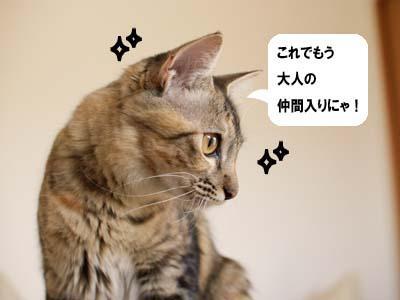 cat1399