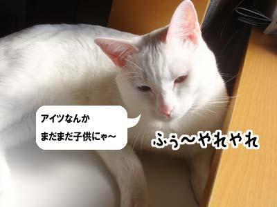 cat1400