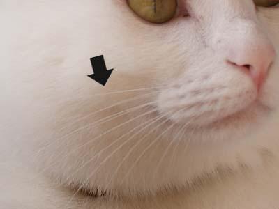 cat1401