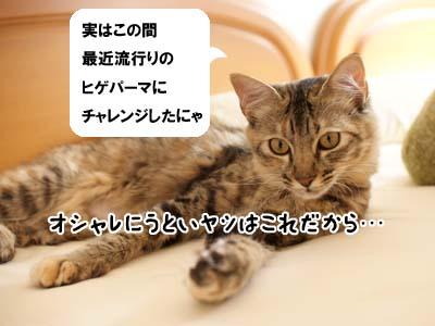 cat1403