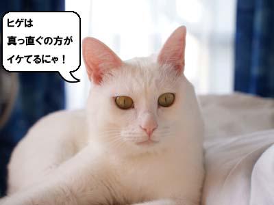 cat1404