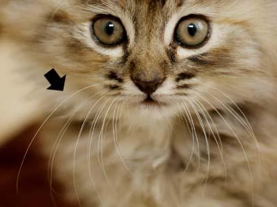 cat1405