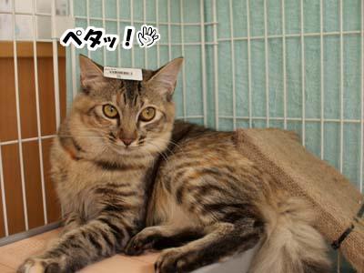 cat1414