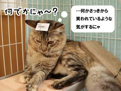 cat1416