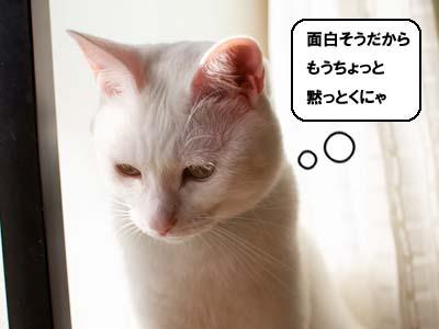 cat1417