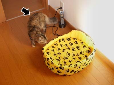 cat1419